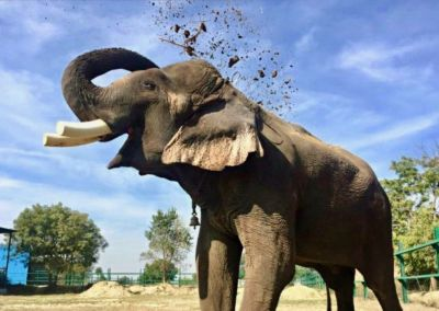 Elephant-rescued-in-UP